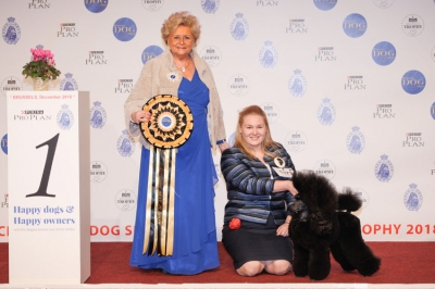 Supreme Best in Show at Brussels was the Miniature Poodle, Yamit Muskat Victorias Secret, owned by Polina Kurbatskaya from Russia. Supreme BIS Judge was Mrs Monique Van Brempt (Belgium).