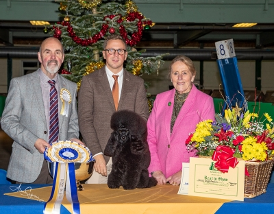 Best in Show at BUBA was the Toy Poodle, Ch Divining Rod's Happy Ever Afterglow (Imp Fin) owned by Mr Tom Isherwood & Mr Jason Lynn, pictured  with Best In Show judge Mr Ian Millar, Tom Isherwood & Meg Purnell-Carpenter (Secretary).