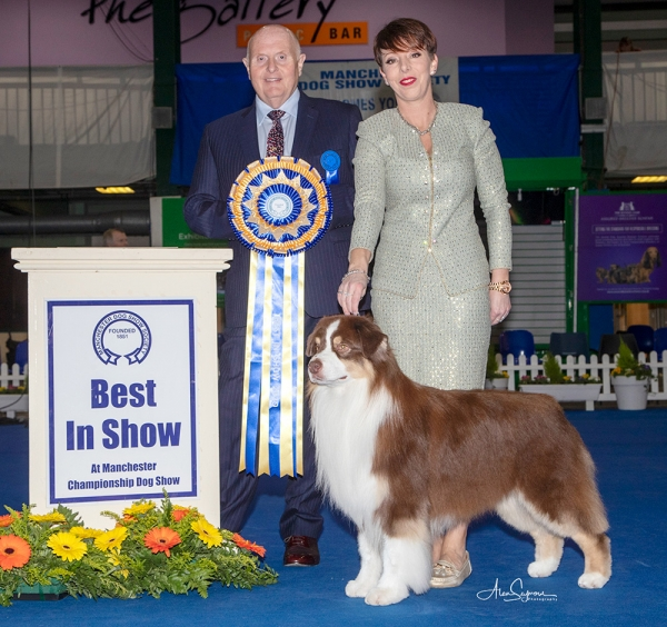 BIS at Manchester was the Australian Shepherd Dog, AKC ASCA UK Ch Wyndstar Magic Marker (Imp USA), owned by Kirtley, Erdesz, Shaw & Raymond, pictured with best in show judge David Guy.