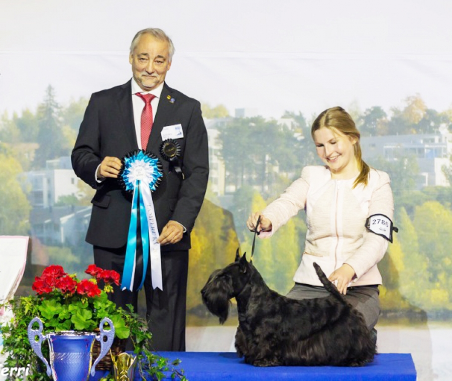 The winner of BIS was the Scottish Terrier, Ch Quaint Quincent, owned by Arja Tuuliniemi and handled by Hilde Fredriksson. BIS Judge was Zeferino Silva (Portugal).