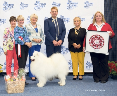 Best In Show, judged by Liz Stannard, was Val Freer and Sue Smith's Samoyed Ch Nikara Diamond Dancer, seen here with SKC Convenor Stuart Payne, SKC Secretary Gillian Jones and Ali Morton for Royal Canin.