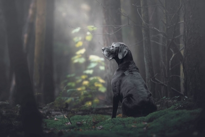 Truly amazing photo of Noa the Great Dane