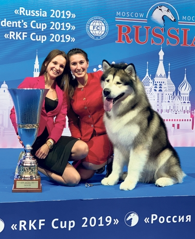 The supreme BIS winner moscow was the alaskan malamute