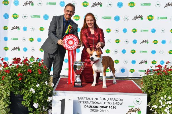 Supreme Best In Show winner the American Staffordshire Terrier