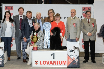 At the Louvanium show's 30 anniversary, the Best in Show was the Miniature Poodle, Nice Steps For Me Only, owned by Julia Nad from Germany. Best in Show judge was Claudio De Giuliani (Italy).
