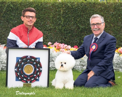 Relaxing after being awarded Best in Show at Darlington is the Bichon Frise, Ch Regina Bichon You Rock My World at Pamplona with owners Michael Coad and Rich Smith.