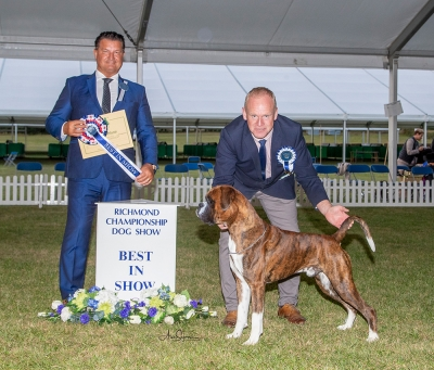 Best in Show at Richmond Championship Show was the Boxer, Lanfrese Argento, owned by Mr Mitch Griffiths, pictured with Chairman Nick Bryce-Smith, Best In Show judge Paul Harding (Pringham) & Ricky Furnell (Royal Canin).