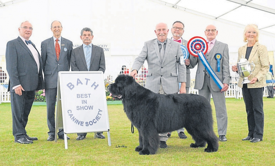 Best in Show judge Barrie Croft pictured with Paddy Galvin handling the Chapman's Newfoundland, Ch Merrybear D'artagnan to Best in Show. Also pictured are Chairman, Bill Browne-Cole, President Chris Laurence, Secretary Ben Ford, breed judge Johan Juslin with the OUR DOGS rosette, BIS judge Barrie Croft and Lynne Salt