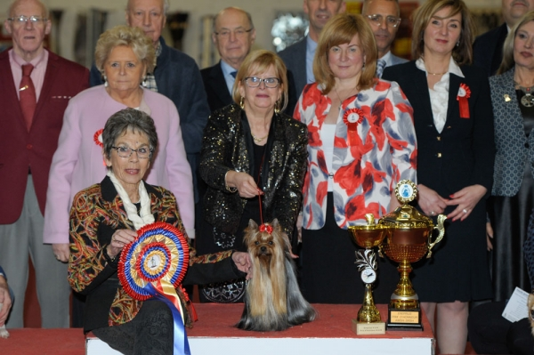 Best in show at the popular Mouscron show in Belgium, out of a decent entry of 1731, was the Yorkshire Terrier, Nadine Carpaccio's Karalen Blyuz Royal Daymond. The judge was Mrs Mach from Switzerland.