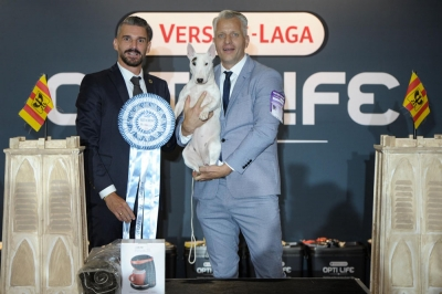 BIS at Mechelen on Saturday was the Miniature Bull Terrier, Vicky Of Bully Lake, owned by Francesca Scorza Petazzi from Italy. BIS Judge was Torsten Lemmer (Bulgaria).