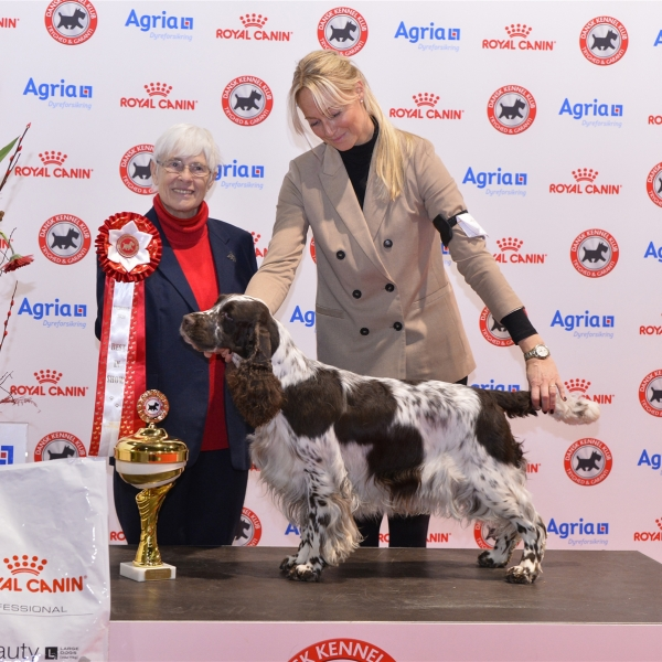 Best In Show was awarded to the English Springer Spaniel, Sieger's Never Walk Alone, owned by Dorte Jensen & Kim Jensen. Pictured with the judge Hassi Assenmacher-Feyel.