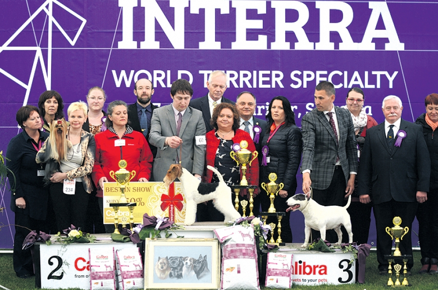 Best in Show of the Interra 2017 was the Wire Fox Terrier, Hampton Court Monte Christo, bred and owned by Victor Malzoni from the UK, presented by Warren Mark Bradley. Res BIS was the Yorkshire Terrier, Sunachates Dancing With Desire, bred and owned by O.Begena from Latvia and Third was the Miniature Bull Terrier, Panda Of Bully-Lake, bred and owned by Zsolt Bagi from Hungary, presented by Norbert Tibay. BIS Judge was Maite Gonzalbo Lorenzo (Spain)