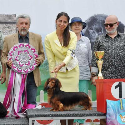 The big winner was the miniature longhaired dachshund Katerinapark Danila.  Its owner Mrs. Marina Evers