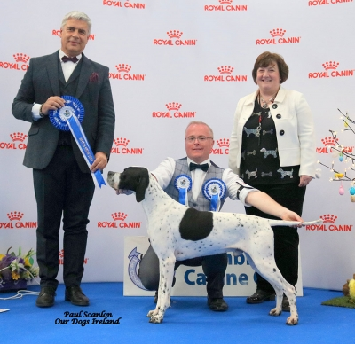 Best in Show at the Combined Canine Club National show on Easter Sunday at the National Show Centre was Stewart and Heather Cummings and Kelly Lawless' Pointer male, the big winning Sh Ch/GB Sh Ch/ Int Sh Ch  Kanix Kroner at Sevenhills who was handled by Stewart. The soon to be elected President of the FCI, Dr Tamas Jakkel was the Best in Show judge. Mary Davidson of show sponsor Royal Canin is also pictured.
