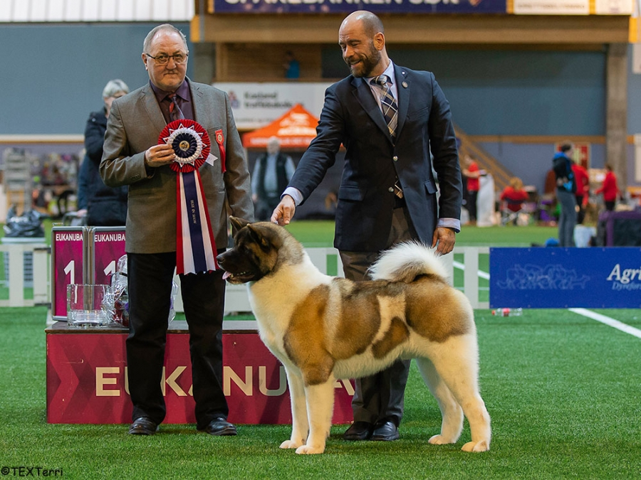 Friday's Best in Show at Boe was the Dobermann, Int Ch J'adore Gucci v Nobel Line, owned by Ingrid Wesenberg. Left is BIS Judge Aase Jakobsen (Norway) and on the right is Group Judge, Nadia Timmermans-Kadenko (Netherlands).