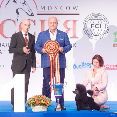 Best in Show at the Russia International Show was the Toy Poodle